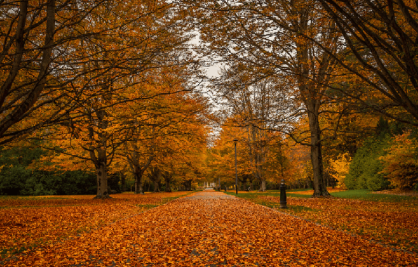 Trees in autumn colours of yellows and oranges with leaves covering the path at Queens Park Invercargill
