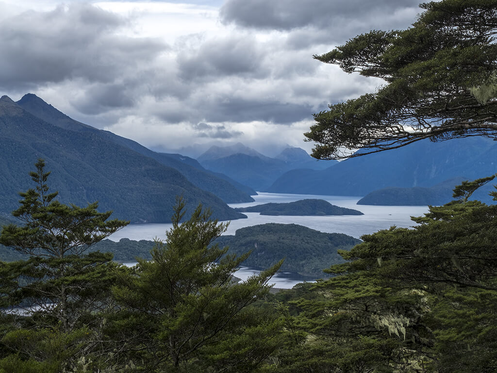 View through the trees down onto the islands of Lake Manapouri