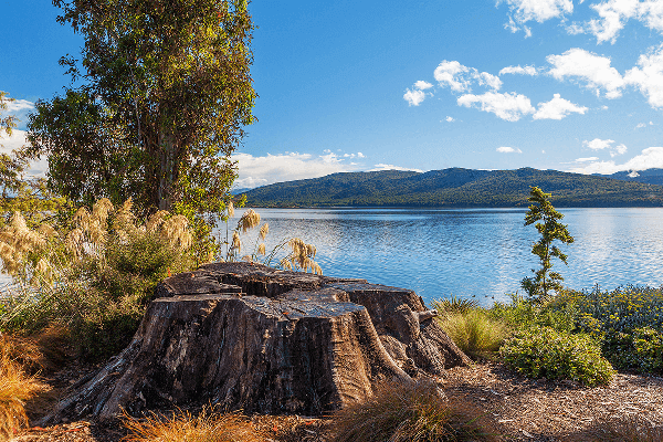 Large tree stump in foreground with Lake Te Anau in background
